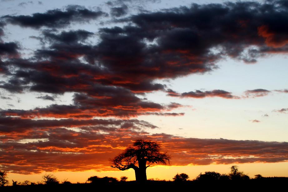 Baobab tree at sunset in Tarangire NP, Tanzania