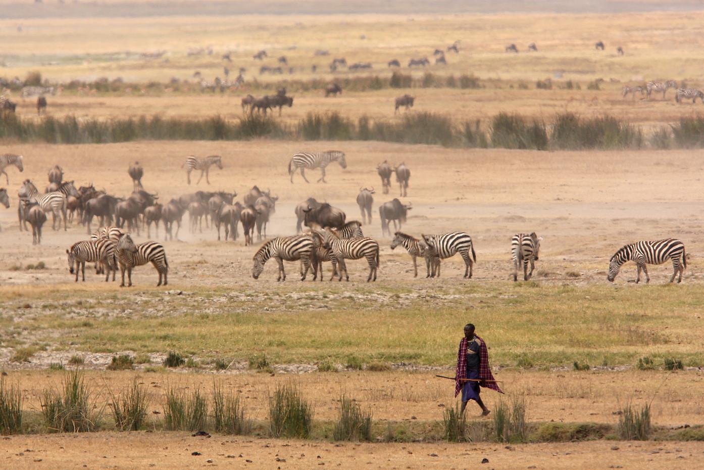 Masai herder on the floor of Ngorongoro Crater, Tanzania