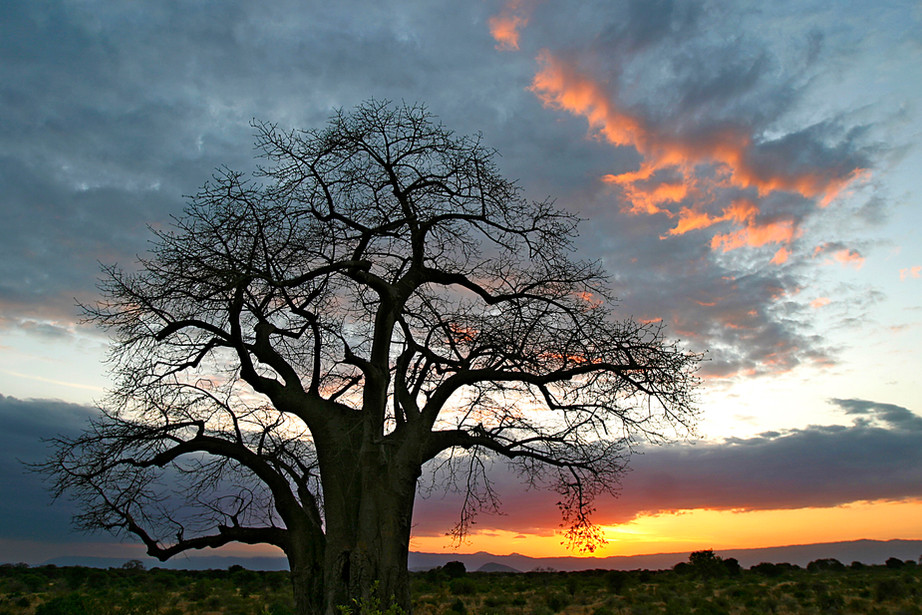 Sunset over a baobab tree and the Rift Valley, Tanzania