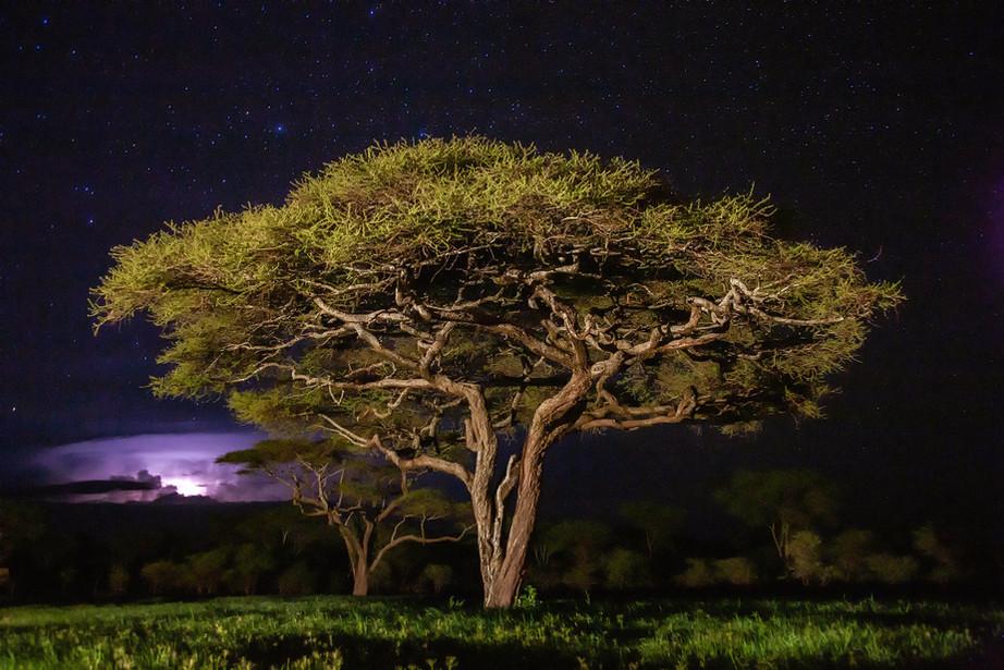 Thunderstorm at night over the Serengeti NP, Tanzania