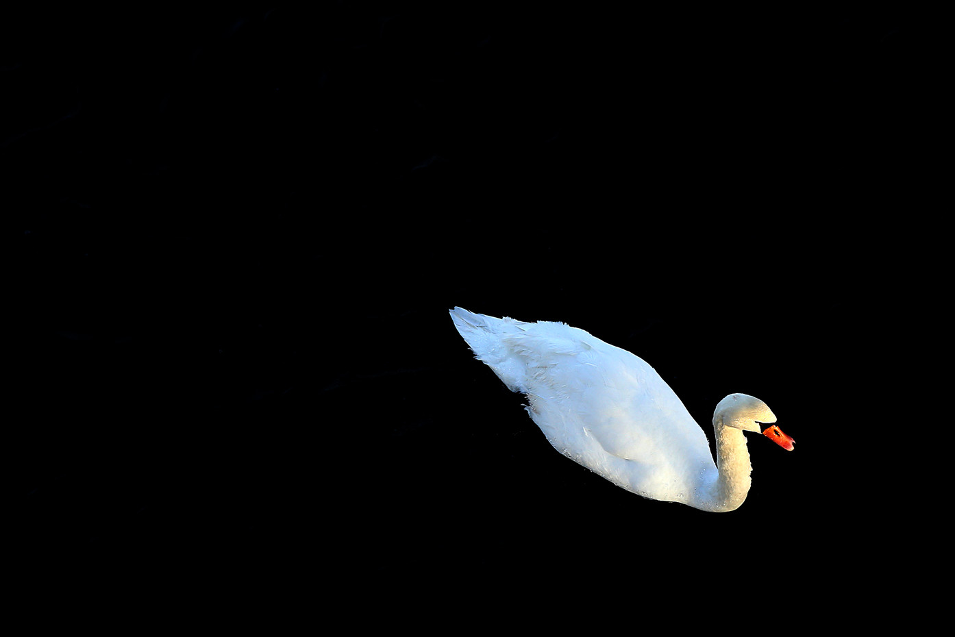 White Swan in Potsdam, Germany