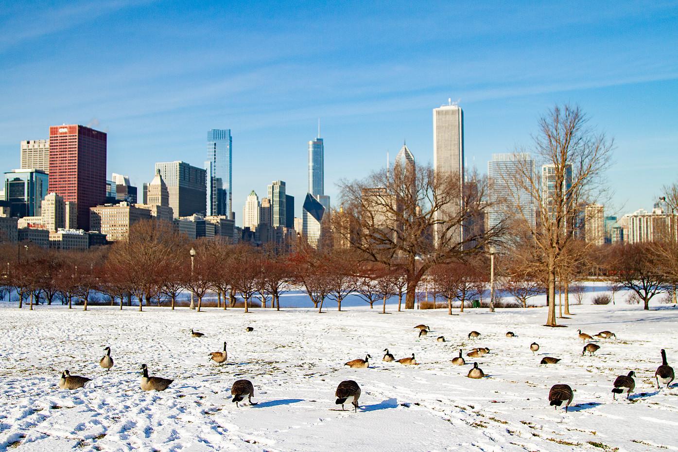 Chicago skyline & Canada Geese, USA