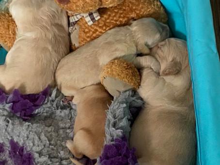 Cassie's fostering 😉