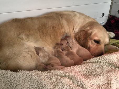 Pasty's babies arrive on 9/10