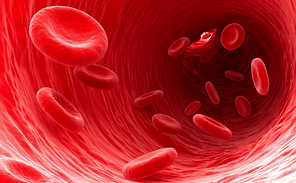 Red-blood-cells.png