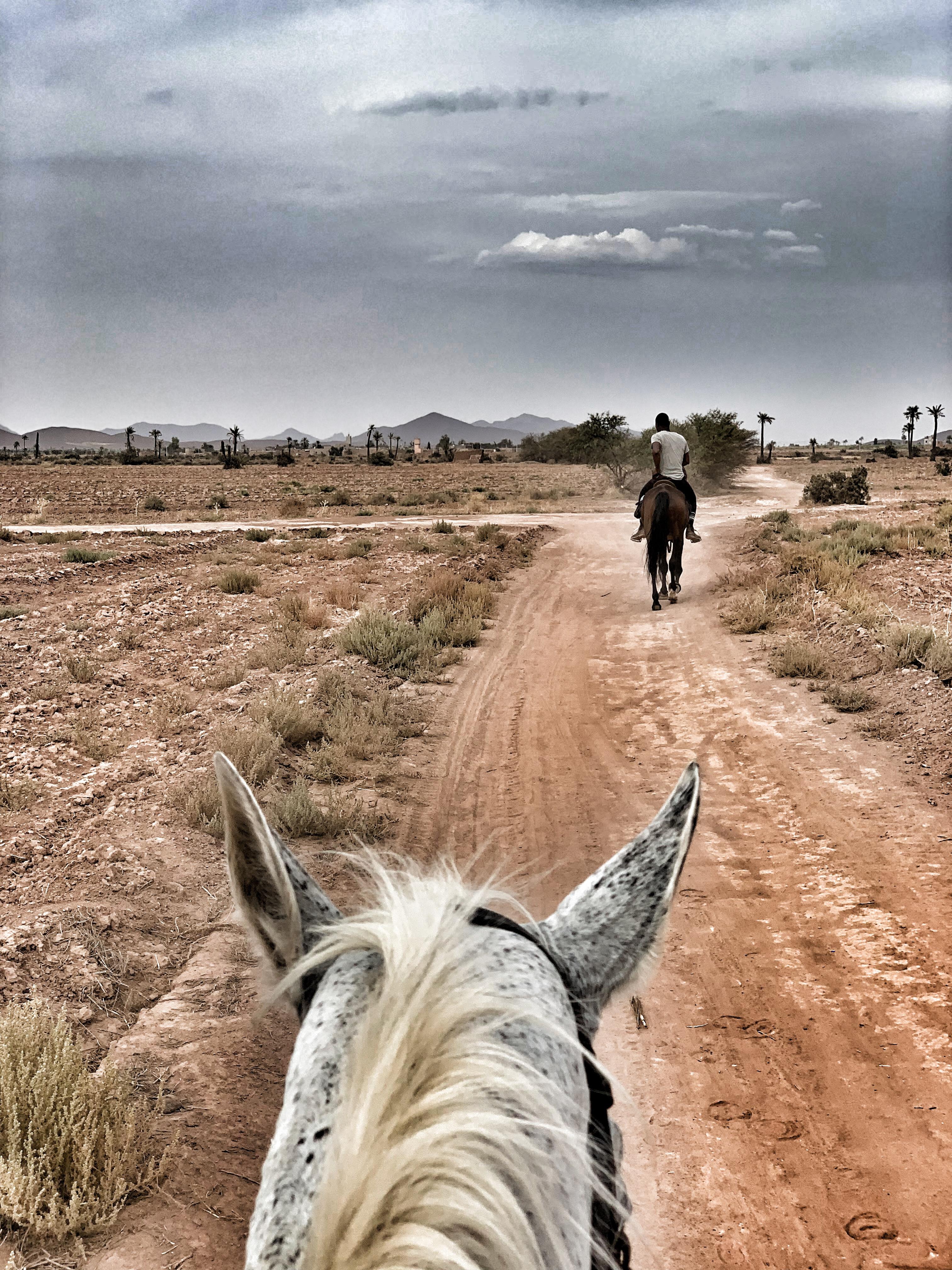 Mit dem Pferd durch die Landschaft