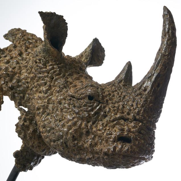 Hoekzema_Square-Lipped Rhino_10.jpg