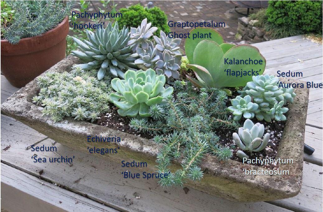 Succulent_trough.JPG