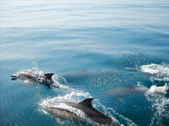 algarve-dolphins.jpg