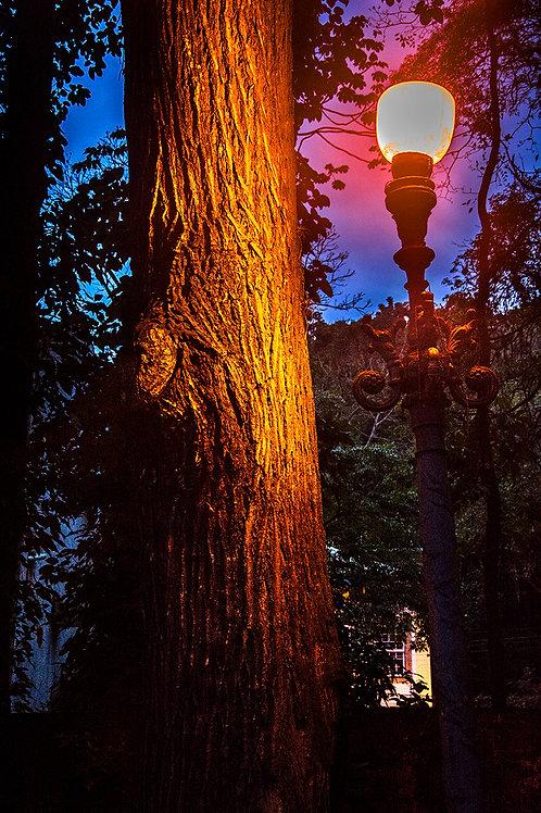 A Árvore Encantada, Largo do Boticário