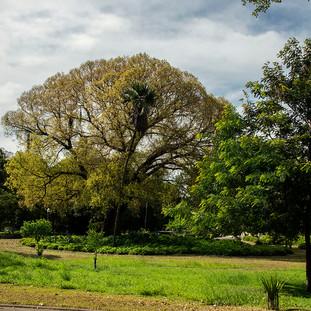 Campo de Santana - RJ