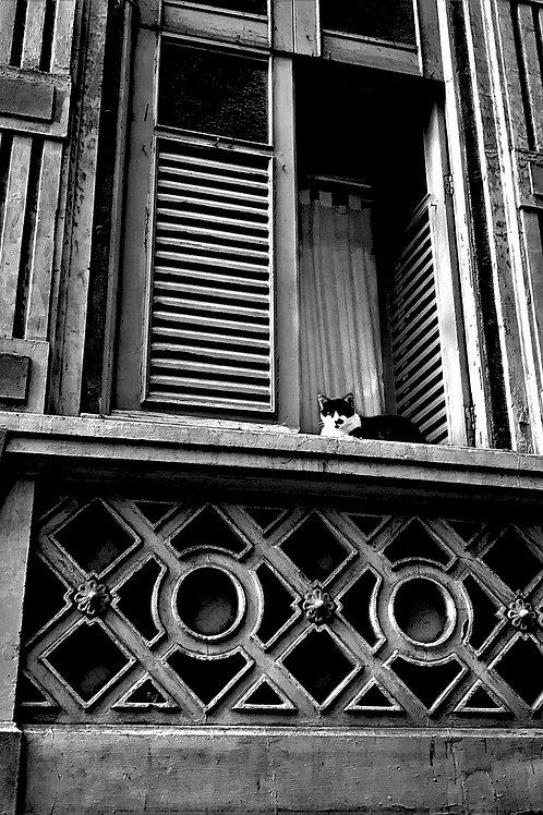 Gato em Casario Centenário, Catete