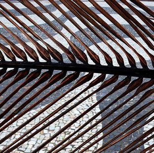 Calcadão de Copacabana sob Folha de Coqueiro