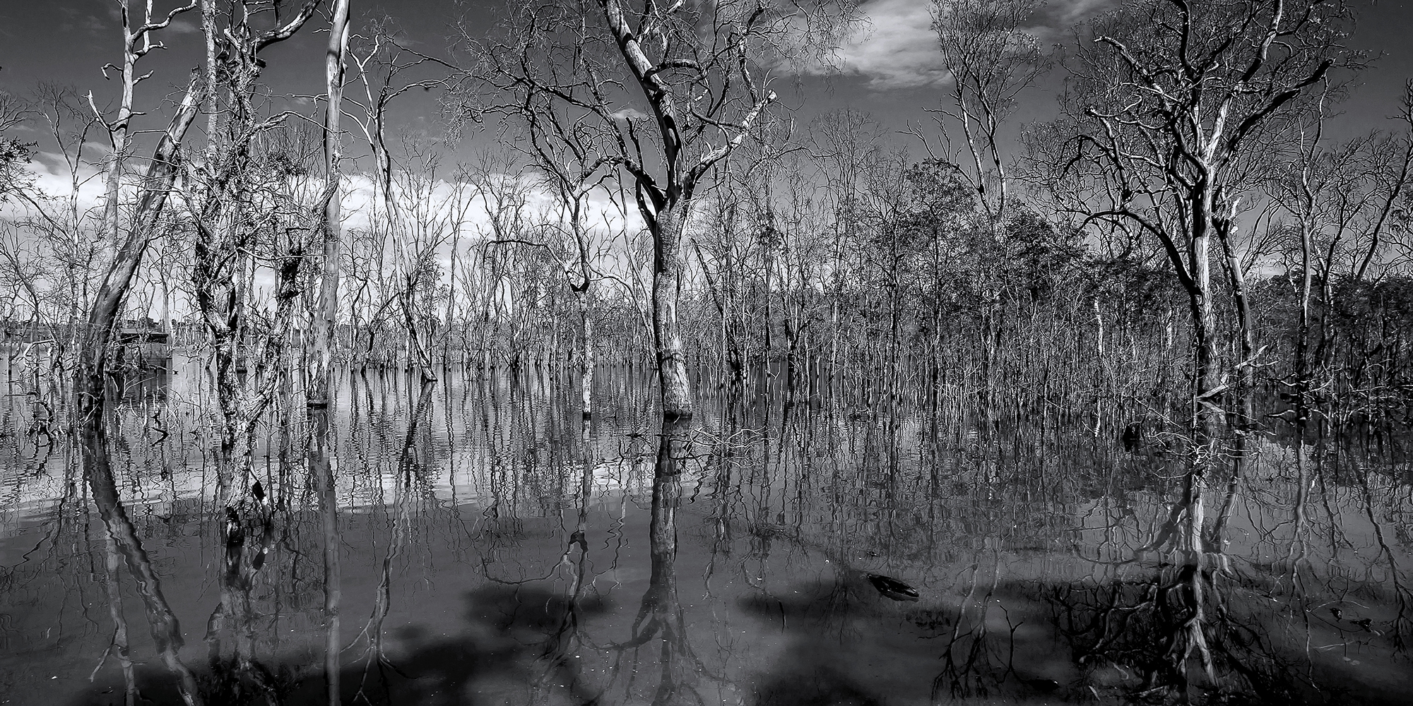 Wooroolin Wetlands (B & W)