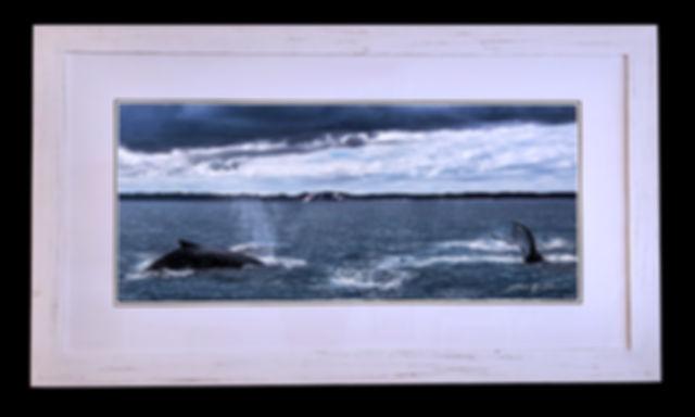 Humpbacks' Rendezvous.jpg
