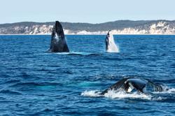 Humpbacks Rendezvous (1)