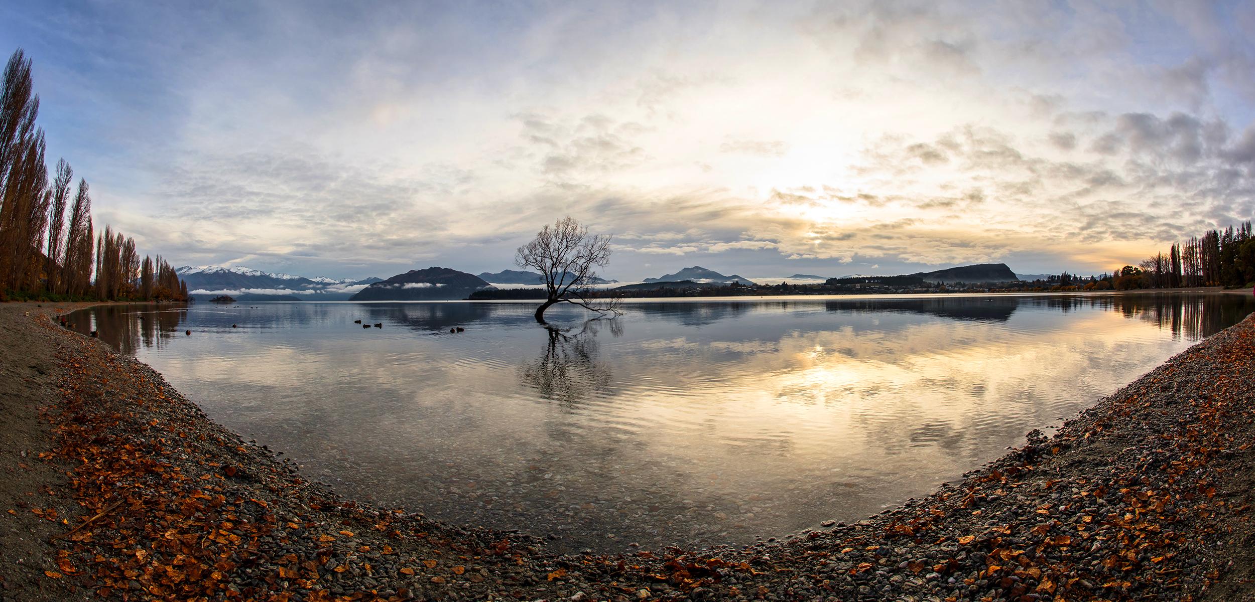 Lonely Tree at Lake Wanaka