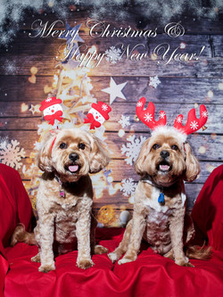 Molly and Toby Christmas Portrait