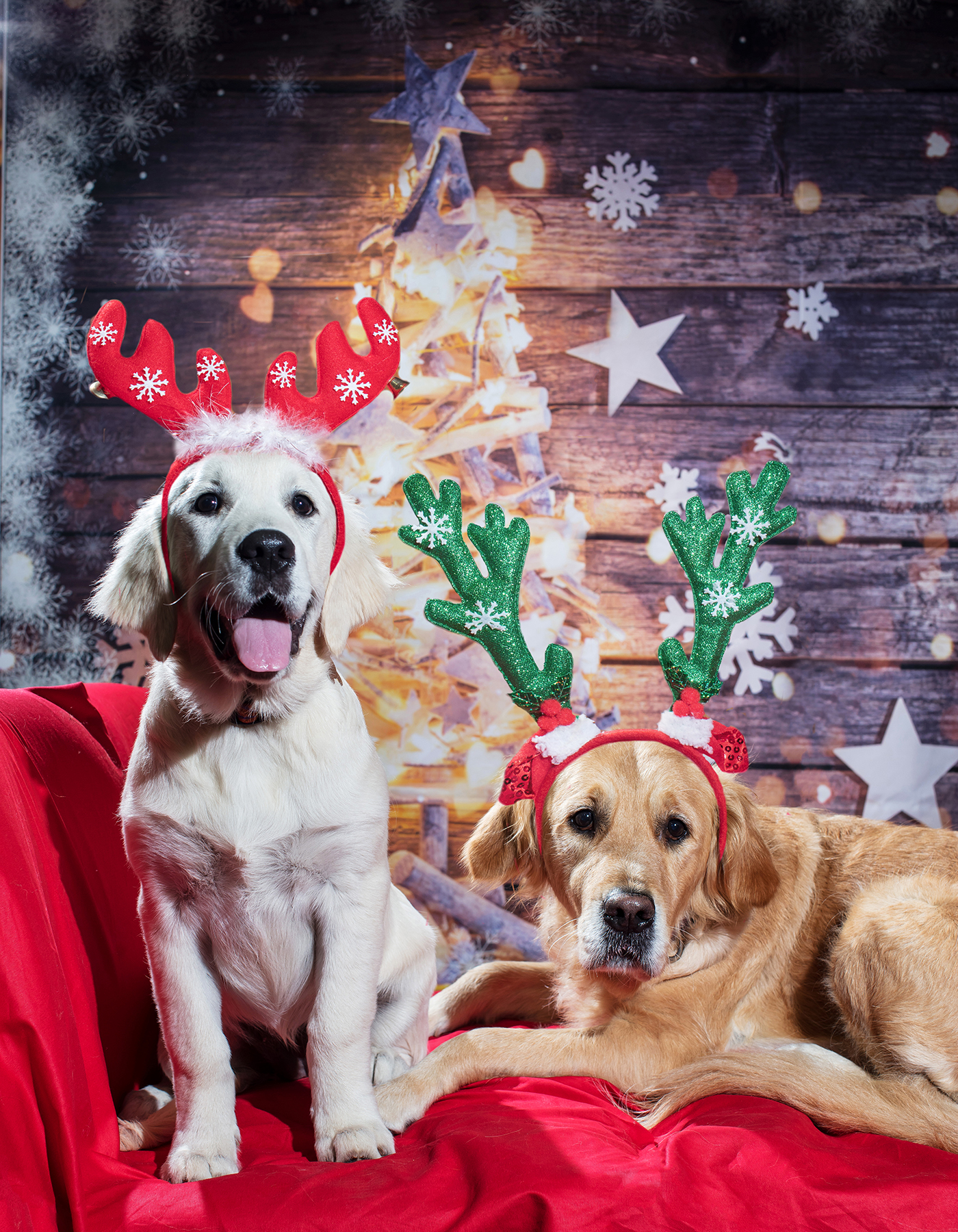 Indigo and Willow Christmas Portrait_HD.