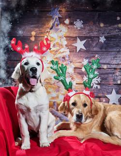 Indigo and Willow Christmas Portrait_HD.