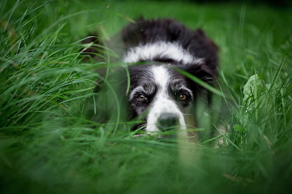dog family photographer