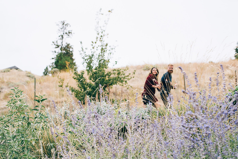 lavendar plants wedding