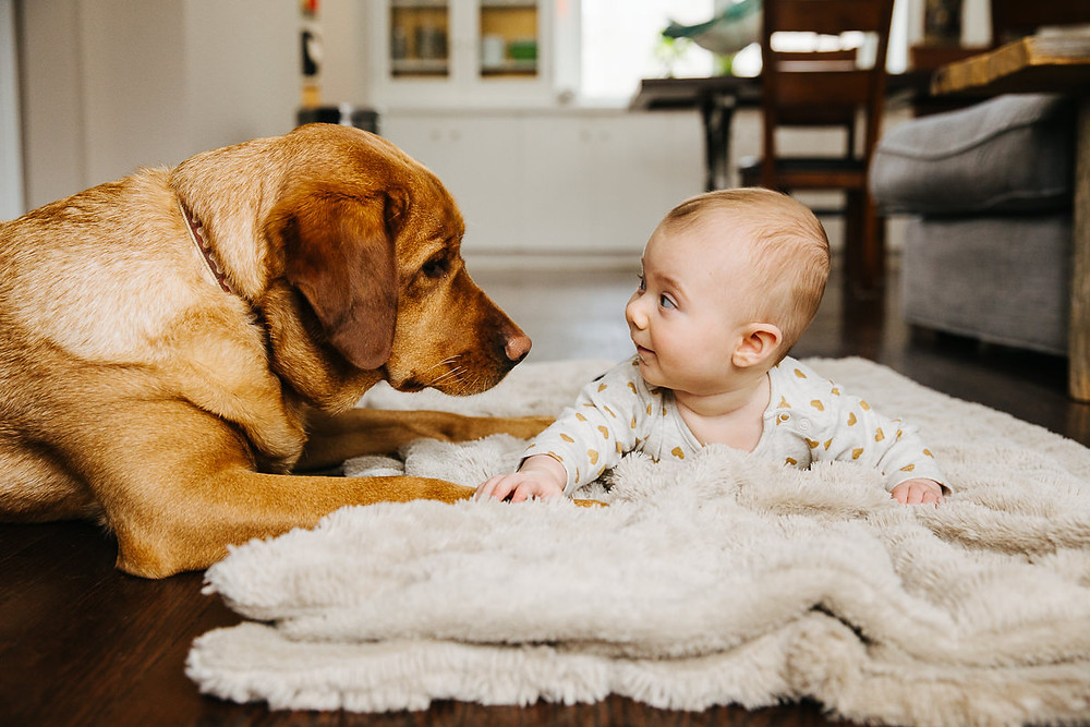 baby and dog family photos