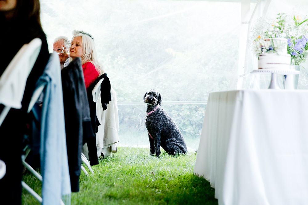 dog at wedding