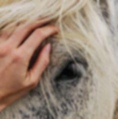 Canva - Person's Hand on White Horse's F