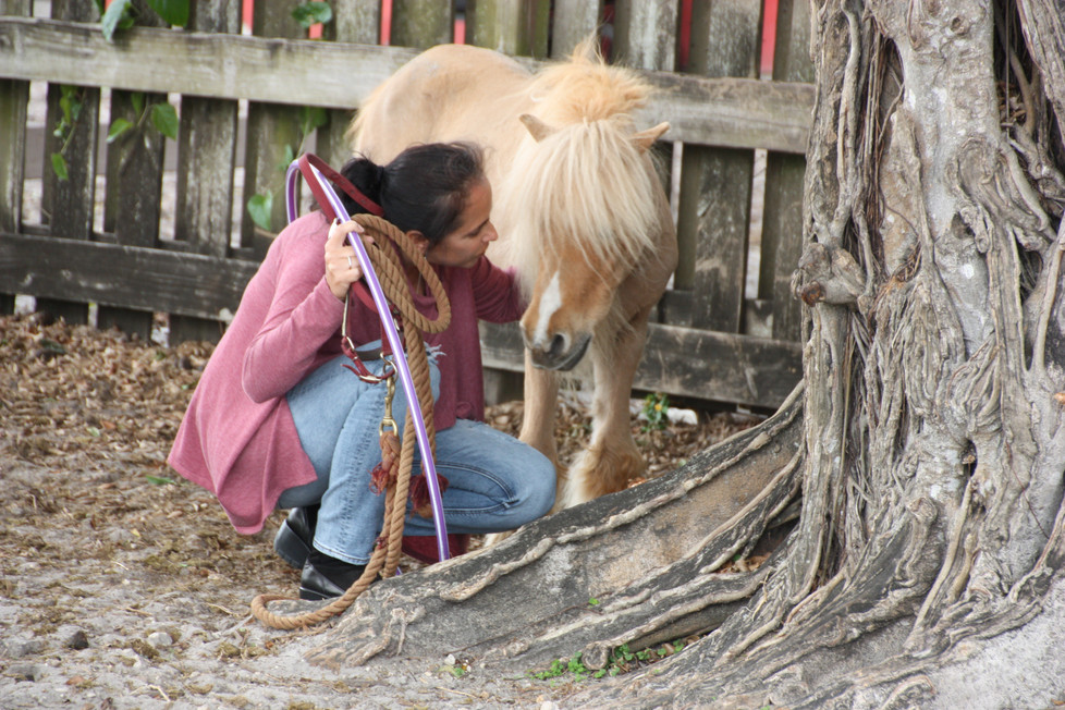 Choosing an Equine Assisted Psychotherapy Team