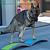 Kontrolle Hund, Check-up der Übungen B3