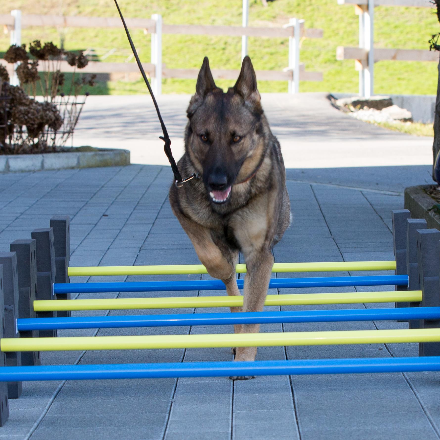 Fitnesstest für Hunde B1