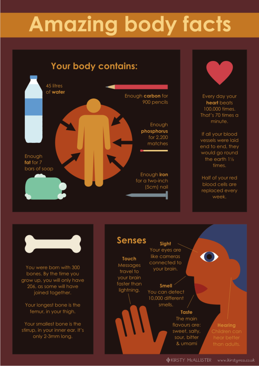 Amazing body facts