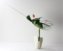 Louise Worner Monsteria leaf, tulip, ste