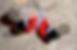 Spotted Lanternfly.png