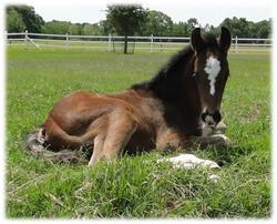 Benjamin FCF as a foal