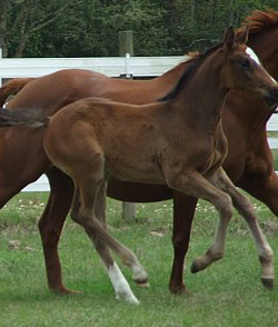 Liam as a foal