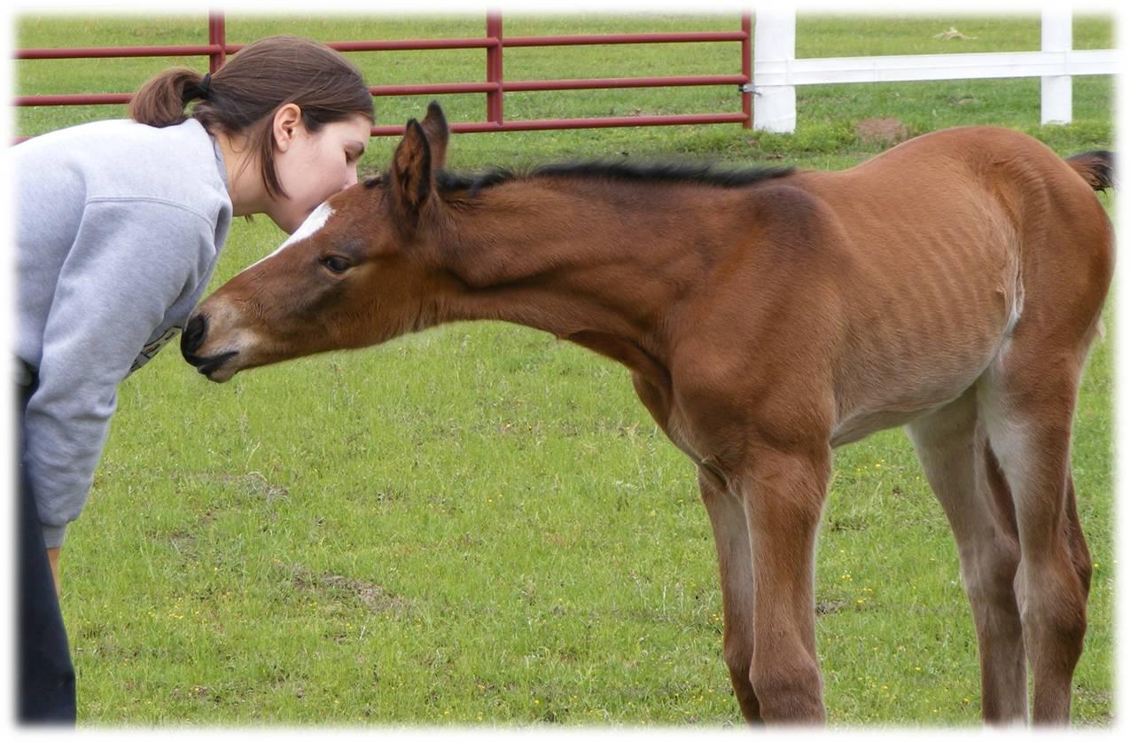 Cali as a foal