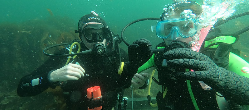 Ocean Try-A-Dive Experience