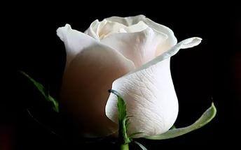 ритуал на скорое замужество, сделать ритуал на мужа, привлечь мужа, ритуал на удачное замужество, ритуал на скорое замужество, заговор на скорое замужество, заговор быстро выйти за муж, заговор как быстро выйти замуж, заговор чтобы быстро выйти замуж, ритуал чтобы скоро выйти замуж, как быстро выйти замуж, не везет в любви что делать, не везет в любви, как встретить свою вторую половинку, привлечь мужа, привлечь в свою жизнь любимого человека, как привлечь любимого человека, на скорое замужество с люимым человеком, выйти замуж за парня, колдовство на скорое замужество, ритуал белая роза, заговор белая роза, белая роза ритуал, белая роза заговор,аффирмации +на замужество скорейшее, аффирмации +на любовь +и замужество скорейшее,  молитва +о скором замужестве, для скорого замужества, заговор +на скорое замужество, обряд +на скорое замужество, молитвы скором счастливом замужестве, ритуал +на скорое замужество,  приметы +к скорому замужеству, обряд +на скорое замужество самостоятельно, обр