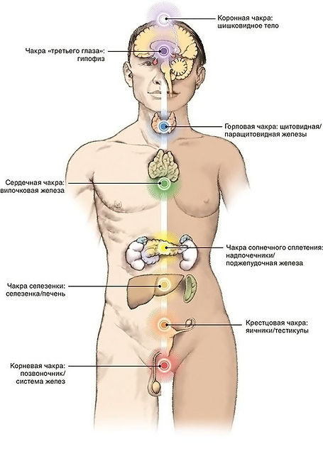Хотя чакры взаимосвязаны между собой, каждая имеет определенный цвет. Цвет чакры напрямую связан с частотой колебания энергии.   Итак, энергия поступает в чакру и далее направляется по энергетическим каналам в нервную систему человека. Затем поступает в эндокринные железы и кровь для насыщения клеток тела человека.  И если нарушается работа одной из чакр, это отражается на состоянии других.  Организм человека перестраивается и старается компенсировать недостающую энергию «больной» путем перестройки в своей работе.