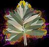 AYASAIRY_logo_final_edited.png