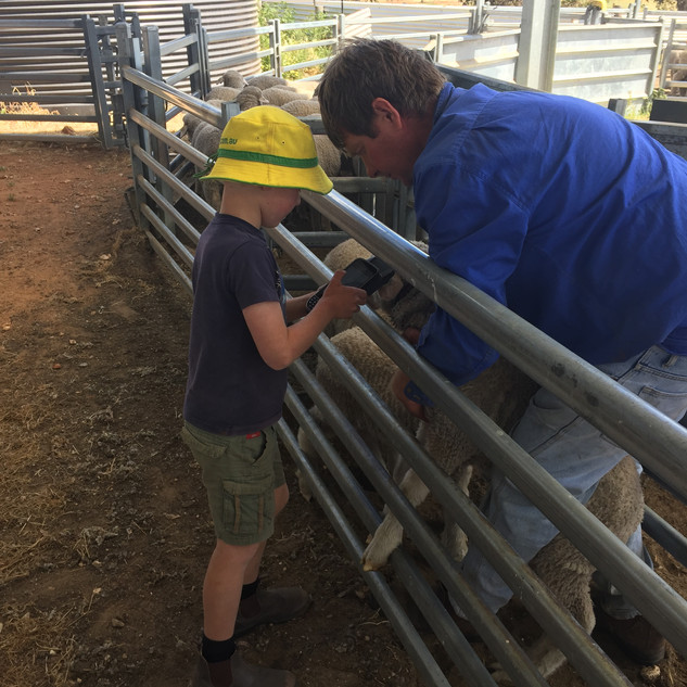 Applying sensors for pedigree matching 2019