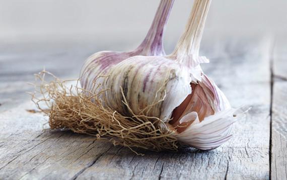 food styling fresh garlic