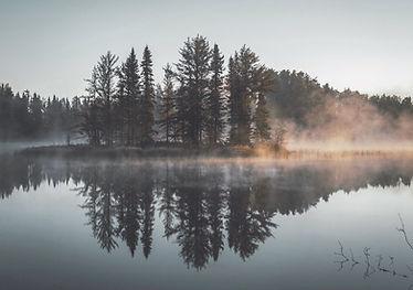 Misty foresta Riflessione