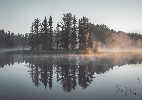 Réflexion brumeuse Forêt