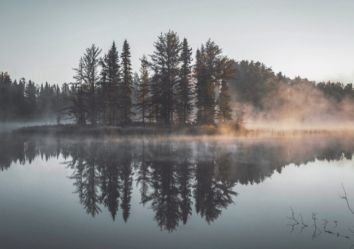 Reflexión brumosa del bosque