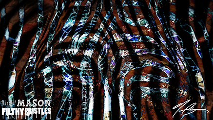 Pourewa Zebra