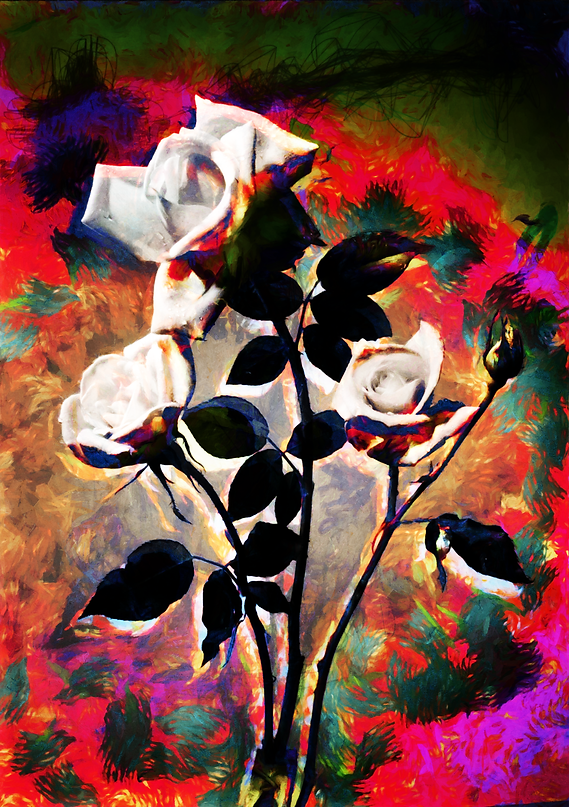 Severe Roses