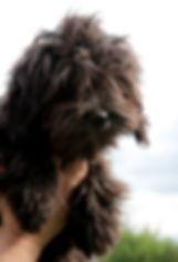 oxana-burli.jpg